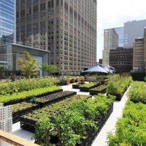 Urban Farming praktik budidaya untuk perkotaan
