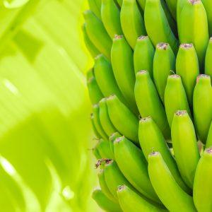 buah pisang yang kaya akan manfaat