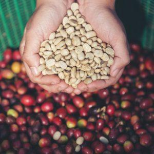 sejarah kopi arabika
