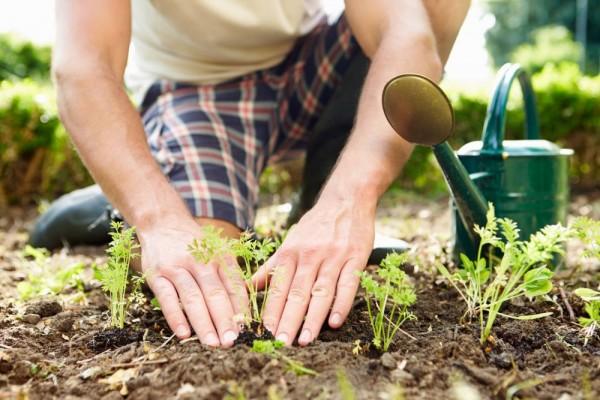 berkebun-jadi-pilihan-aktivitas-saat-bulan-puasa