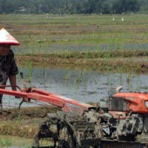 istilah-dalam-pertanian-padi