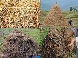potensi-limbah-pertanian-sebagai-pupuk-organik