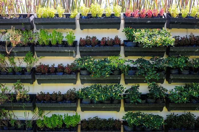 Membuat-Kebun-Sayur-Mini-di-Halaman-Rumah