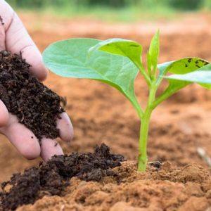 Limbah-Jadi-Kompos-Untuk-Bumi-Lebih-Baik