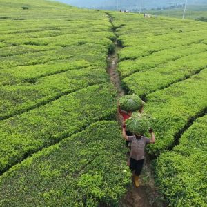 Komoditas-Pertanian-Unggulan-Indonesia