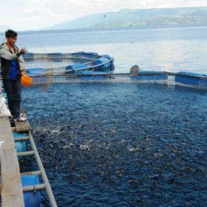 Berternak-Ikan-Sistem-Teknologi-RAS